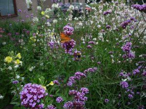 foto natuurrijk tuinieren
